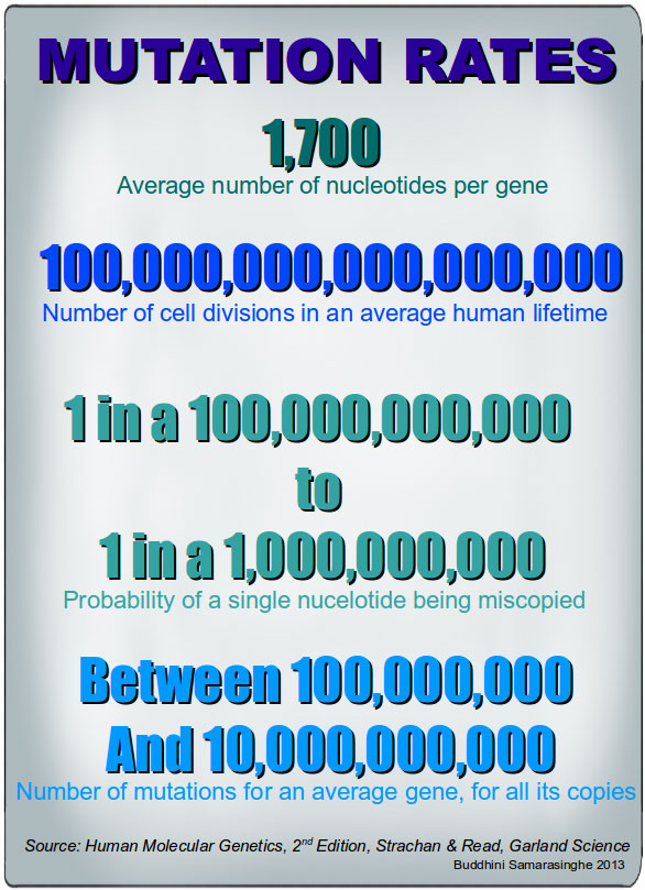 Graphic showing mutation rates