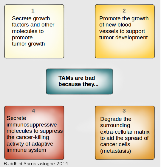 Graphic showing by Tumor Associated Macrophages (TAMs) are bad
