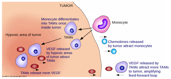 Graphic showing tumors and TAMS