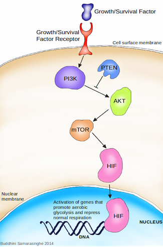 Graphic showing metabolism in cancer cells
