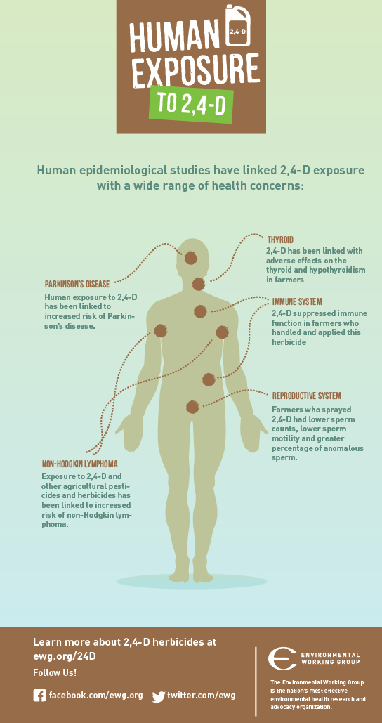 Human exposure to 2,4-D.  Human epidemiological studies have linked 2,4-D exposure with a wide range of health concerns.