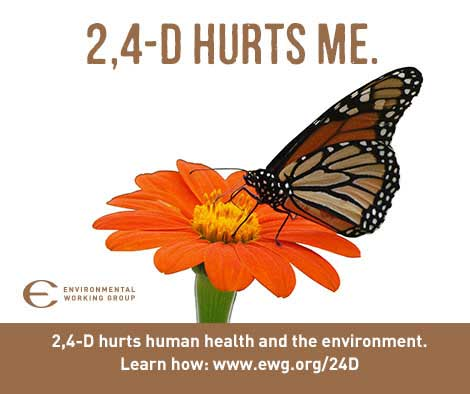 2,4-D hurts me - picture of butterfly