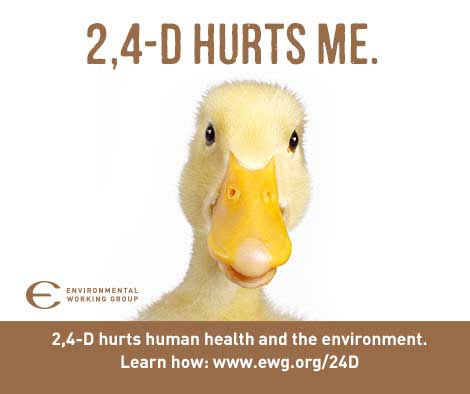 2,4-D Hurts me - picture of baby duck
