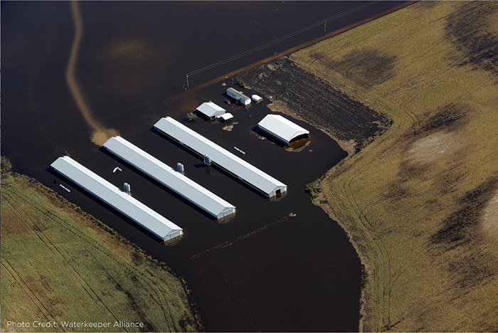 Flooded poultry barns