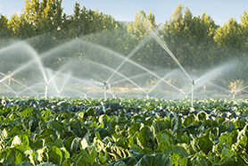 Fields being sprayed with irrigation water