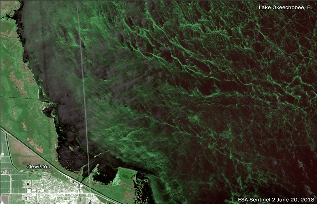 Across U S , Eruptions of Toxic Algae Plague Lakes